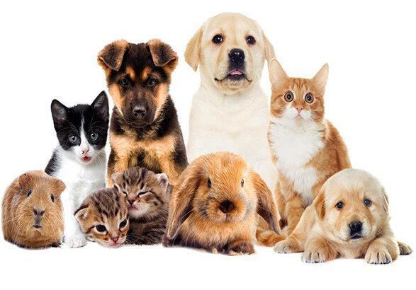 آیا حیوانات خانگی ناقل بیماری کرونا هستند؟