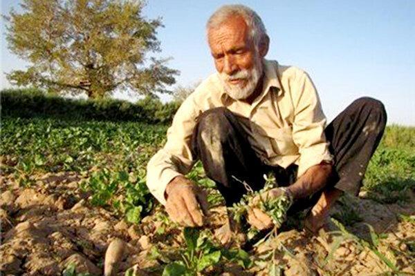 نگرانی های کشاورزان مرکزی ، فصل، فصل عروسی دلال هاست